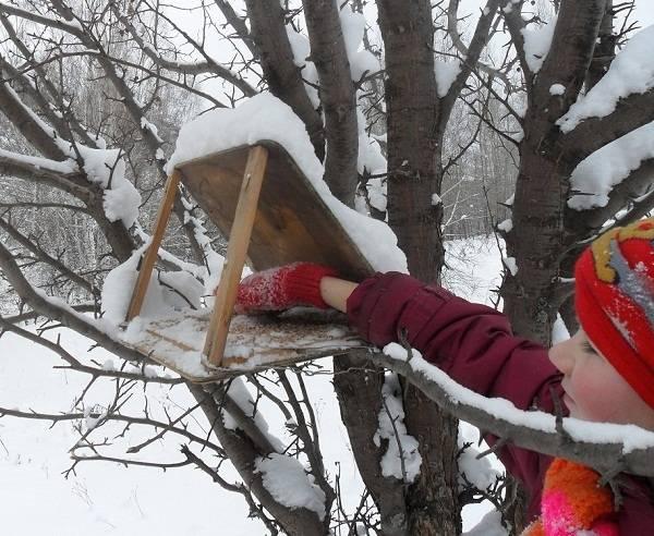 «Юннат» изучает зимующих птиц!