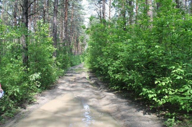 Пикет за сохранение лесных зон Новосибирска