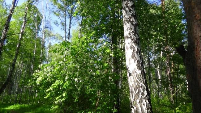 Шлюзовской лесоболотный комплекс