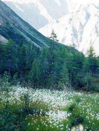 Луг у подножья горы