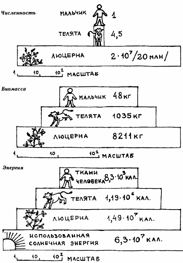 биомаст к инструкция - фото 9