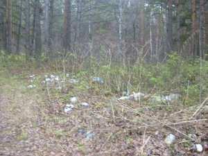 Мельниково расположена особо охраняемая природная территория местного значения – парк «Зелёный Прометей»