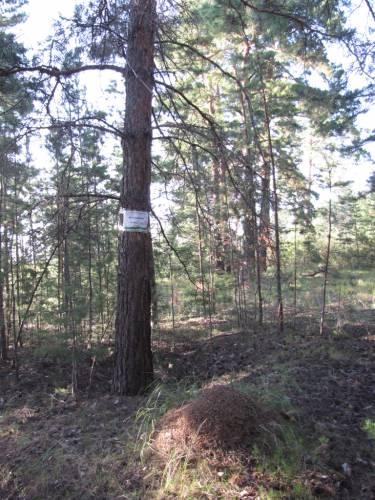 Муравейник - ключевой объект биоразнообразия